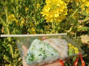 菜の花グルメ 渥美半島