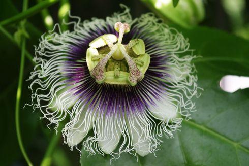 世にも不思議な花