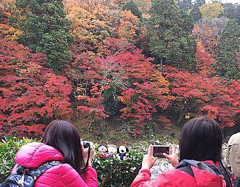 香嵐渓もみじまつり2016 渋滞情報 食べ歩き(豊田市足助)