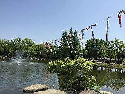 堀内公園で放牧♪(安城市)