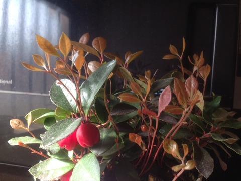 新芽と野菜の花