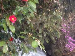 実家と周辺の花達