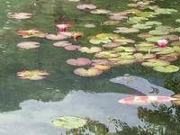 名もなき池 (モネの池)   岐阜県