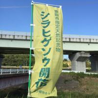 シラヒゲソウ(豊田市御船町)