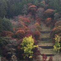 大井平公園  (豊田市稲武地区)