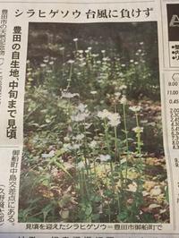 湿地の植物 (豊田市)