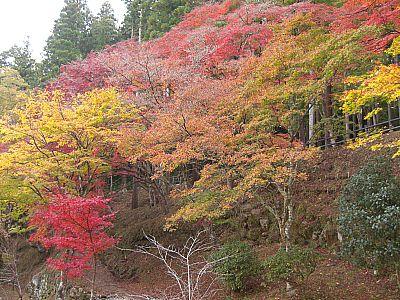 香嵐渓の紅葉(豊田市)