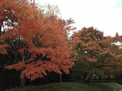秋の京都  3日目
