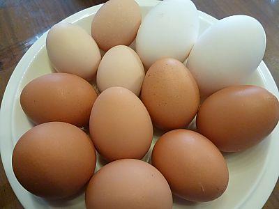 佐久間養鶏場の卵(豊田市浄水)