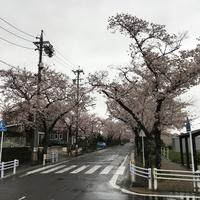 私的桜の名所