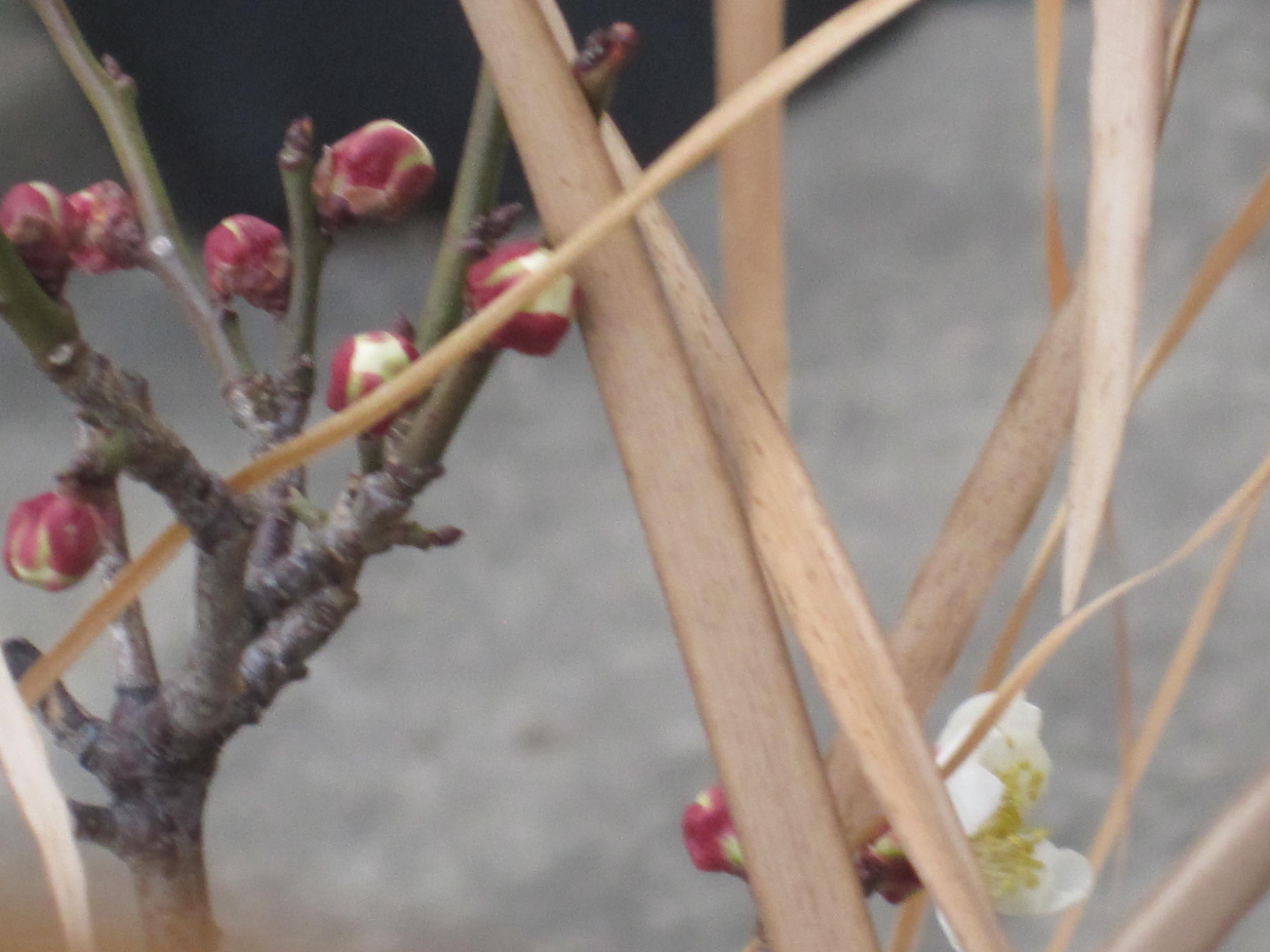 春見つけた!