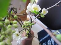 茶花・木瓜の花