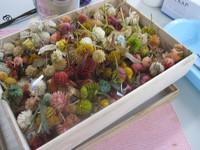 生花から作るプリザ・千日紅
