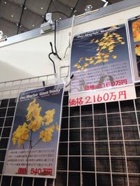 世界蘭展日本大賞2015  その3。