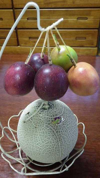 パッションフルーツ 落果