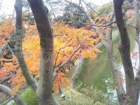 岡崎東公園紅葉へ寄り道ジョグ