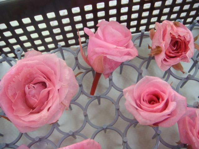 生花から作るプリザレッスン