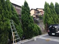 台風被害 倒木の立て起こし