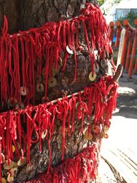 御朱印・縁結びの木・撫でうさぎで有名な大須にある神社「三輪神社」