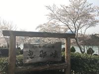 恵那峡でお花見、チキンハウスで鶏ちゃんランチ