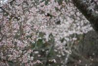小原の秋は春