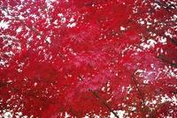 やっぱり秋は赤
