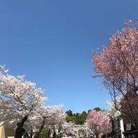 犬山散歩*