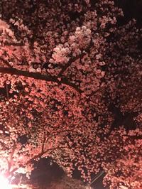 桜ももう終わり・・・
