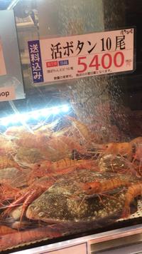 北海道産ボタン海老、生きたまま食べて来ました!