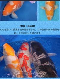 変わり鯉生産第一人者 鯉の一品家 高橋美行氏の鯉への情熱!