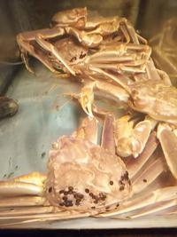 花屋敷の水槽の活蟹 タラバ・花咲・ズワイ 北海道より