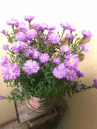 キレイな紫色(*^^)v