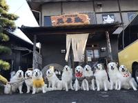 看板犬グレートピレニーズ親子・姉妹集会