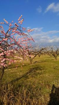 みよし市情報!梅の花見に行きませんか❗️