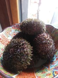 旬の食材をご提供  登別から殻つき馬糞ウニ