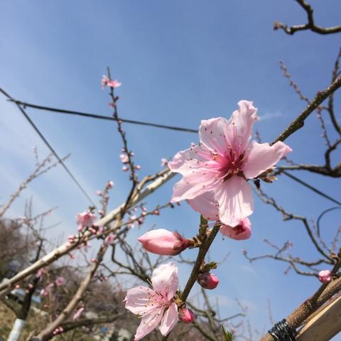 桃の季節がやってきた!