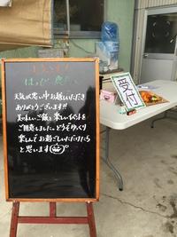 稲刈り体験2017