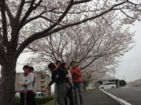 桜満開!!ここは意外と穴場かも?