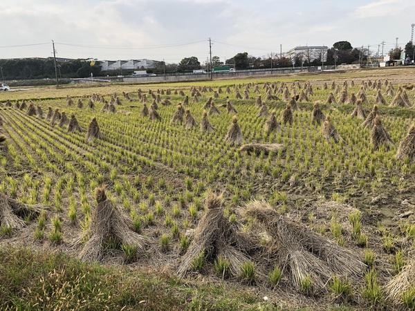 【お茶農家】冬の仕事