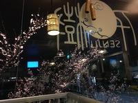 中華 千樹さん 2016/12/12 10:32:09