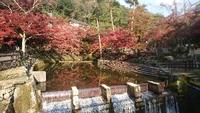 瀬戸の岩屋堂公園の紅葉♪ 2017/11/17 21:17:00