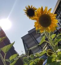 夏ですね~ 2018/07/14 17:06:11