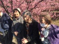 早咲きの河津桜見て来ました!