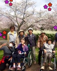 桜に誘われてお出かけ〜!