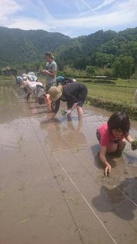 田植え体験  親と子がいなかで泥んこを満喫