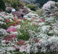 絶景スポット これ、桜じゃありませんょ。春休みに大切な人と大切な思い出を残したい方へ、提案です。