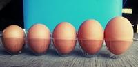 卵の秘密。たまご兄弟がこっそり教えます。