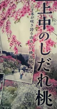 春の絶景。  豊田市旭町で、桜とはまた違った華やかさの○○が見頃を向かえます。