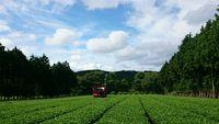Beautyな景色の中で収穫完了☆
