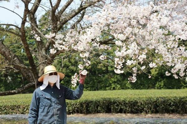 桜と変質者
